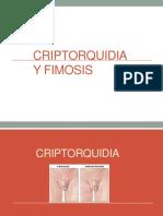 criptorquidia, fimosis.ppt