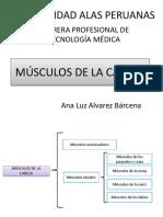 3) Músculos de La Cabeza