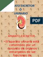 A. Urinario