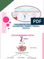 fisiologia del ciclo sexual.ppt
