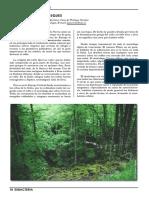 MagiaBosques.pdf