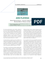 Argentina - Aves Playeras
