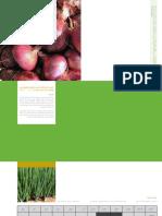 دليل إنتـاج الخـضروات- في الحقول المكشوفة- - البصل