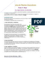 Plantas vasculares (Hoja)