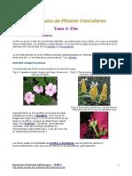 Plantas vasculares (Flor)