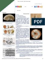 Fósiles - Ammonites - Región de Murcia Digital