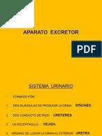 MORFOFISIOLOGIA APARATO EXCRETOR