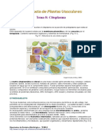 Planta Vasculares citoplasma