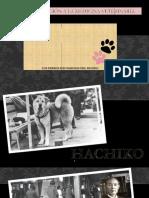Los perros más famosos del mundo.pptx
