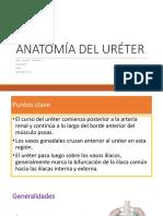 Anatomía de Uréter