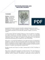 Aspectos Biologicos de Gracilaria Chilensis.pdf
