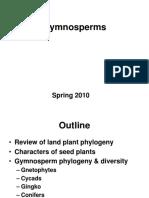 Gymnosperms (1)