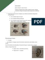 Embriologi System Pencernaan