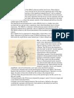 BarnesRhytidectomy