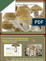 When Do Magic Mushrooms Start Growing?