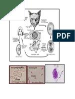 parasitologi saraf jiwa