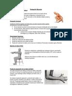 Evaluación Muscular