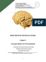 Conceptos básicos de neuroanatomía.pdf