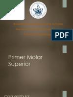 Molares Superiores.pptx