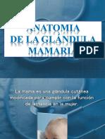 anatomia-glandula-mama.pptx