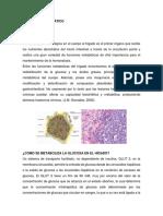 Metabolismo Hepático 1.2 (1)