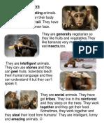 Reading Passage Monkeys Reading Comprehension Exercises 90628