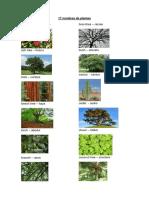 17 nombres de plantas en ingles.docx