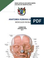 MÚSCULOS CUTÁNEOS (DE LA EXPRESIÓN FACIAL).pdf