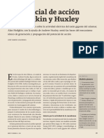 El potencial de acción de Hoodgkin y Huxley