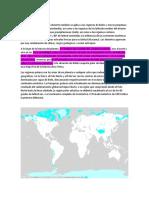 BIOMA DEL ARTICO- DESIERTO POLAR