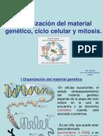 Ciclo celular y mitosis II Medio JMS.pptx