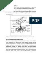 Relacion suelo planta.docx