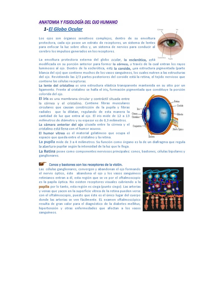 ANATOMIA Y FISIOLOGÍA DEL OJO HUMANO.pdf