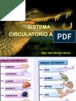 Circulatorio Animal