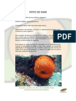 poto de mar.pdf