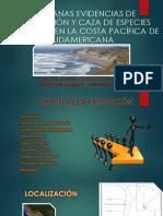 Tempranas Evidencias de Navegación y Caza de Especies