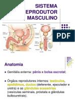 Fisiologia Do Sistema Reprodutor - UNINILTON LINS