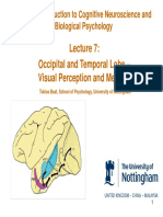 C81BIO_Occipital and Temporal Lobe