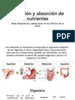 Digestión y Absorción de Nutrientes
