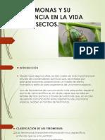 LAS FEROMONAS Y SU IMPORTANCIA EN LA VIDA.pptx