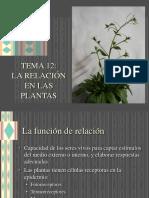 12_relacion_plantas.ppt
