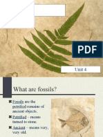 Fossils Harding