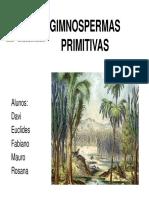 Gimnospermicas