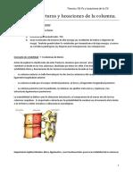 Fracturas_y_luxaciones_de_la_columna_ver.pdf