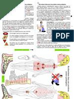 Position Assise Pathogene Texte Et Schema