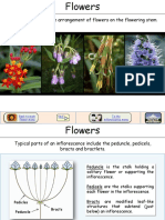 Inflorescence Types