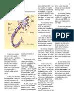 anat_sistema nervoso.pdf