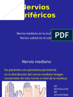 Nervios-periféricos