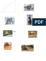 animales por clima.docx