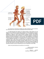 Funcion de Los Musculos Superficiales